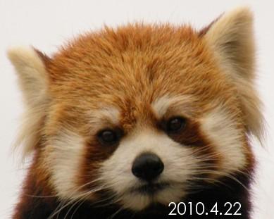 2010_0422_150524dscf6827