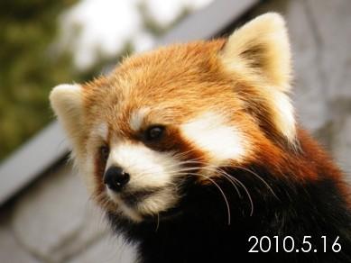 2010_0516_155855dscf7779