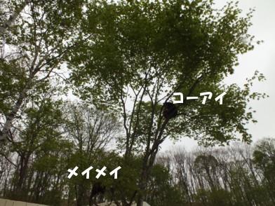 201264_kusiro_007